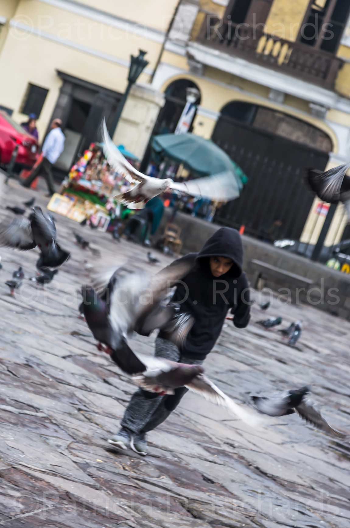 chaseing the pigeons